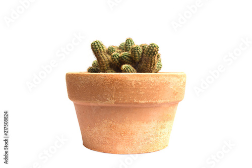 Deurstickers Cactus Cactus plant isolated on white background.