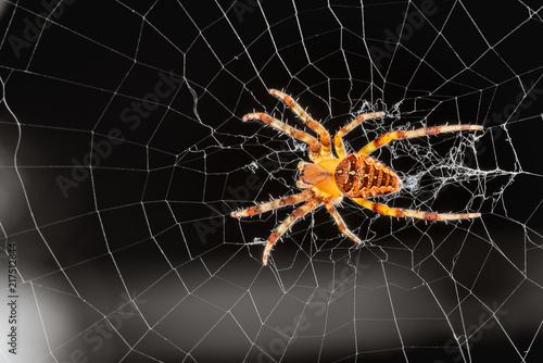 Obraz na plátně Common outdoor spider in Oregon - Cross orb weaver (Araneus diadematus) on the web