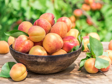 Ripe Apricots In The Wooden Bo...