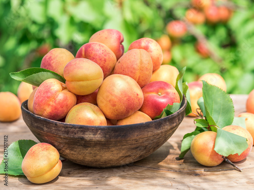 Ripe apricots in the wooden bowl on the table. Canvas Print