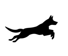 Belgian Malinois Dog Jumping R...