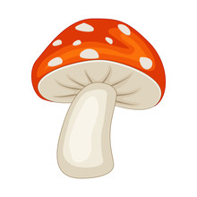 Cartoon Mushroom Isolated On White Background. Vector
