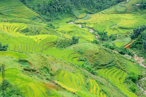 Keuken foto achterwand Lime groen Landscape of golden rice terraced field in harvest season at Sapa in vietnam