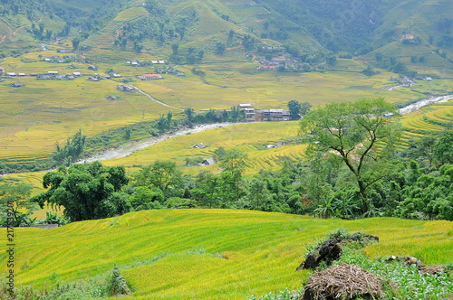 Foto op Aluminium Blauwe jeans Landscape of golden rice terraced field in harvest season at Sapa in vietnam