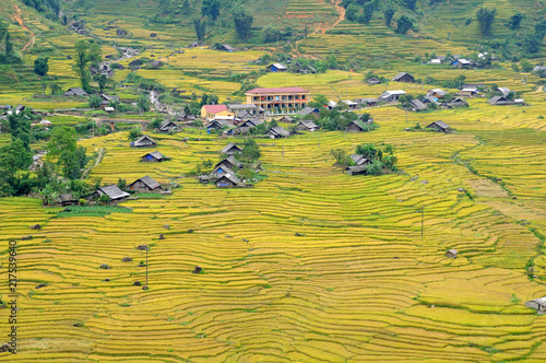 Spoed Foto op Canvas Oranje Landscape of golden rice terraced field in harvest season at Sapa in vietnam