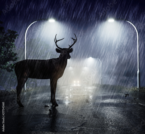 Fototapeta premium Niebezpieczeństwo przejścia jelenia - jeleń patrzy w reflektory nadjeżdżającego samochodu