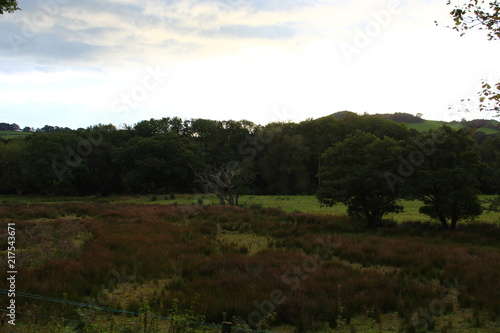 Staande foto Zwart Countryside Nature Landscape Background