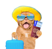 Funny Puppy With Summer Hat And Sunglasses Holds Suitcase, Tickets And Passport Ready For A Vacation. Isolated On White Background