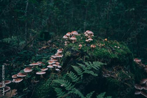 Group of Green Mushrooms