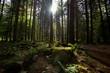 Wälder der Vogesen