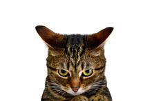 A Furious Cat Is Ready To Atta...