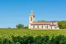 MEDOC (Gironde, France), Vigno...