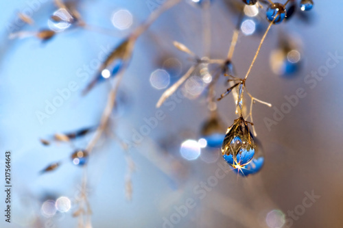 Canvas Print blue dew drops on grass in autumn. autumn meadow background blur