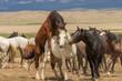 Wild Horses in Utah in Summer