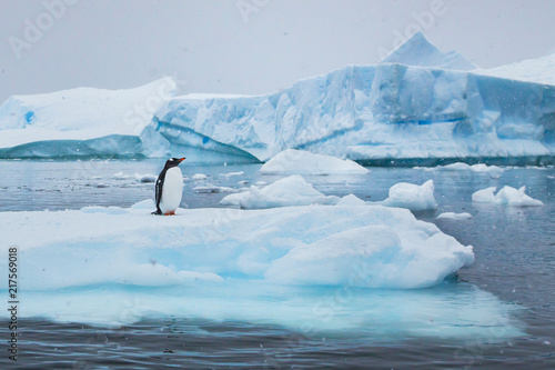 Photo penguin in Antarctica,  wildlife nature, beautiful landscape with icebergs