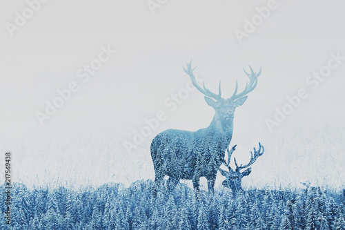 Papiers peints Cerf double exposure of two deers in winter forest, beautiful nature landscape, wilderness in national park