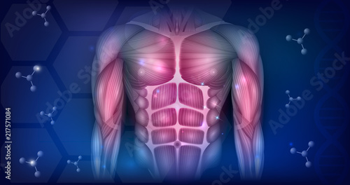 Fotografía Muscles of the human body, torso and arms, beautiful colorful illustration on an abstract blue background