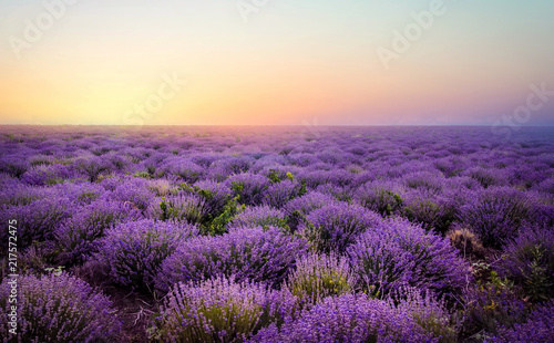 Photo sur Toile Prune Lavender field at the sunset