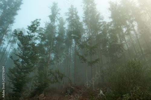 Foto auf Acrylglas Wald im Nebel Fog in the forest, Carpathian mountains 5