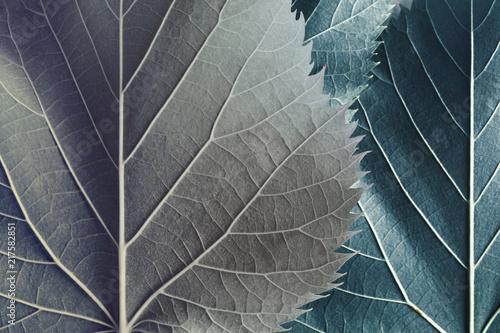 Deurstickers Macrofotografie Beautiful leaves of trees, natural background