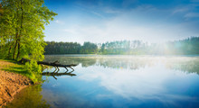 Pine Tree Cut By The Beaver Lies In The Water. Spring Panoramic Landscape. Masuria, Poland.