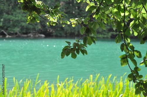 Foto op Canvas Olijfboom Blick auf einen türkisfarbenen See - Schmaler Luzin