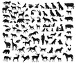 Vector big set of different wild and domesticated animals on white background