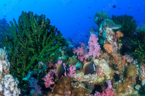 Tropical fish around a colorful but murky tropical coral reef in the Mergui Archipelago, Myanmar