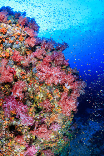 Fototapety, obrazy: Tropical fish swimming around a vibrant, colorful tropical coral reef