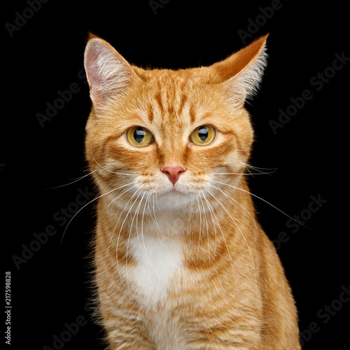 Slika na platnu Funny Portrait of Ginger Cat Gazing with Clumsy ear on Isolated Black Background