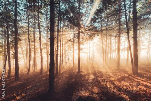 promienie-slonca-wlewaja-sie-przez-drzewa-w-mglistym-lesie