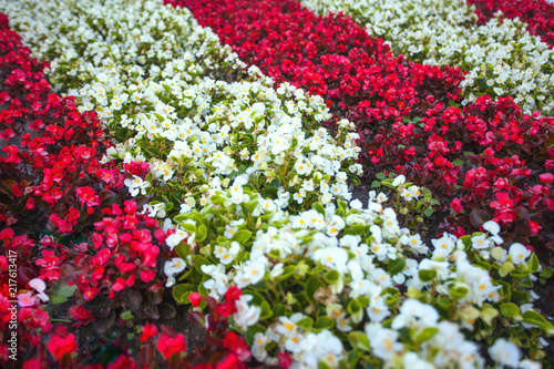 Flowerbed With Small Red And White Flowers Background Buy This
