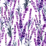 Lavender Field Seamless Pattern. Watercolor or Aquarelle Paintings of Provence Lavandula. Hand Drawn Tea Herbs Flower. Summer Blossom or Foliage of Garden Plant in Aquarelle. Nature and Perfume. - 217617232