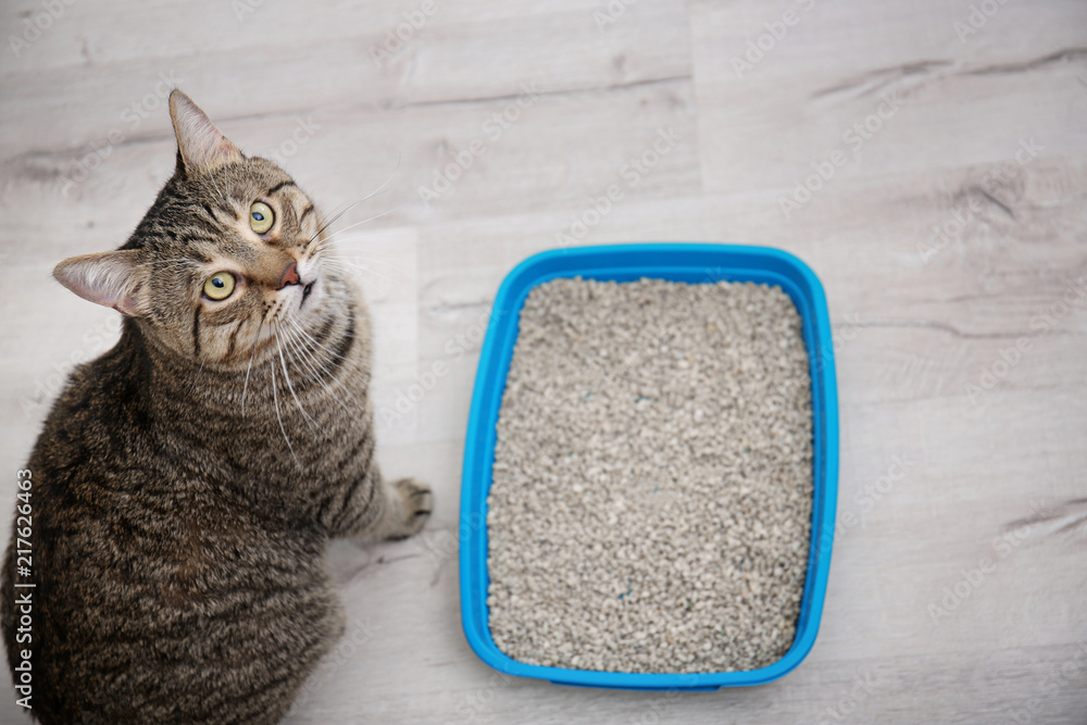 Adorable cat near litter tray indoors. Pet care