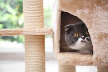 Cute Pussycat On Cat Tree At H...