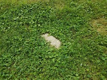 Chunk Of Grey Cement Block In Green Grass Or Lawn