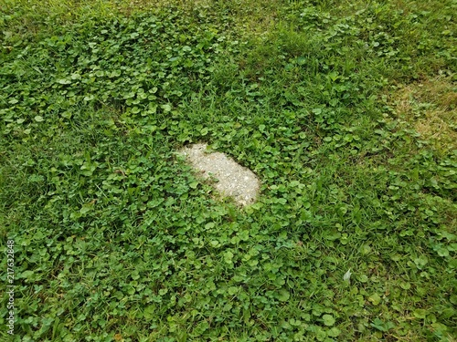 Fotografie, Obraz  chunk of grey cement block in green grass or lawn
