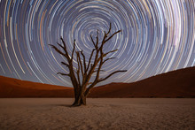 Star Trails Circle Over A Camelthorn Tree