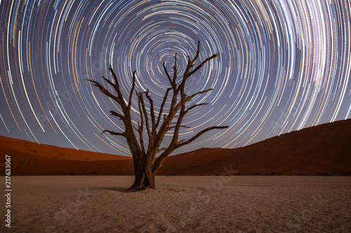 Star trails circle over a camelthorn tree Canvas Print