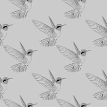 Seamless Humming Bird. Colibri...