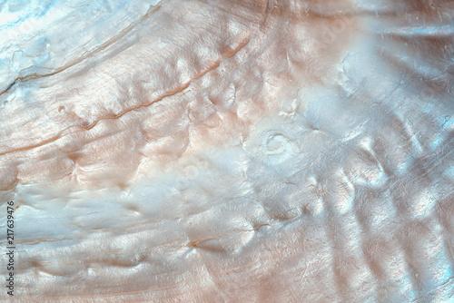 Fotografia luxury nacre seashell background texture close up