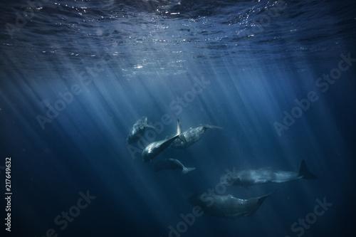 Canvas Print Whales in Ocean