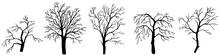 Set Hand Drawn Dead Tree, Vector