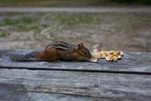 Chipmunk Is Eating Peanuts