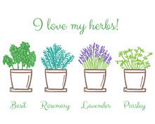 Set Of Frest Garden Herbs In Pots
