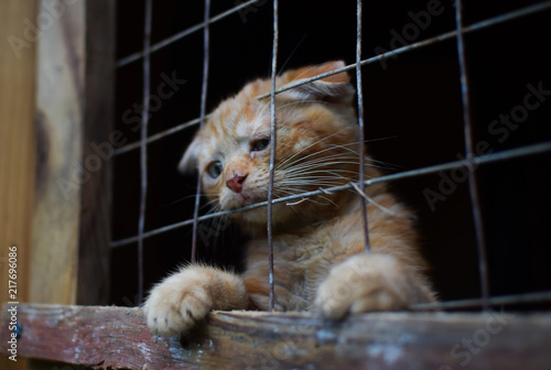 Fotografie, Obraz cat shelter