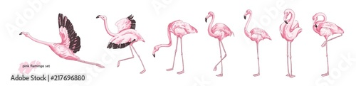 Photographie Collection of pink flamingo in various poses isolated on white background