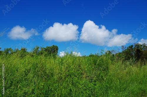 Fotografia, Obraz  青空と草むら