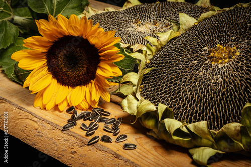 Obraz na płótnie big and delicious sunflower on an old wooden table on a black background