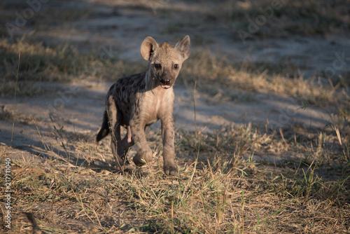 Foto op Plexiglas Hyena Hyena Cub